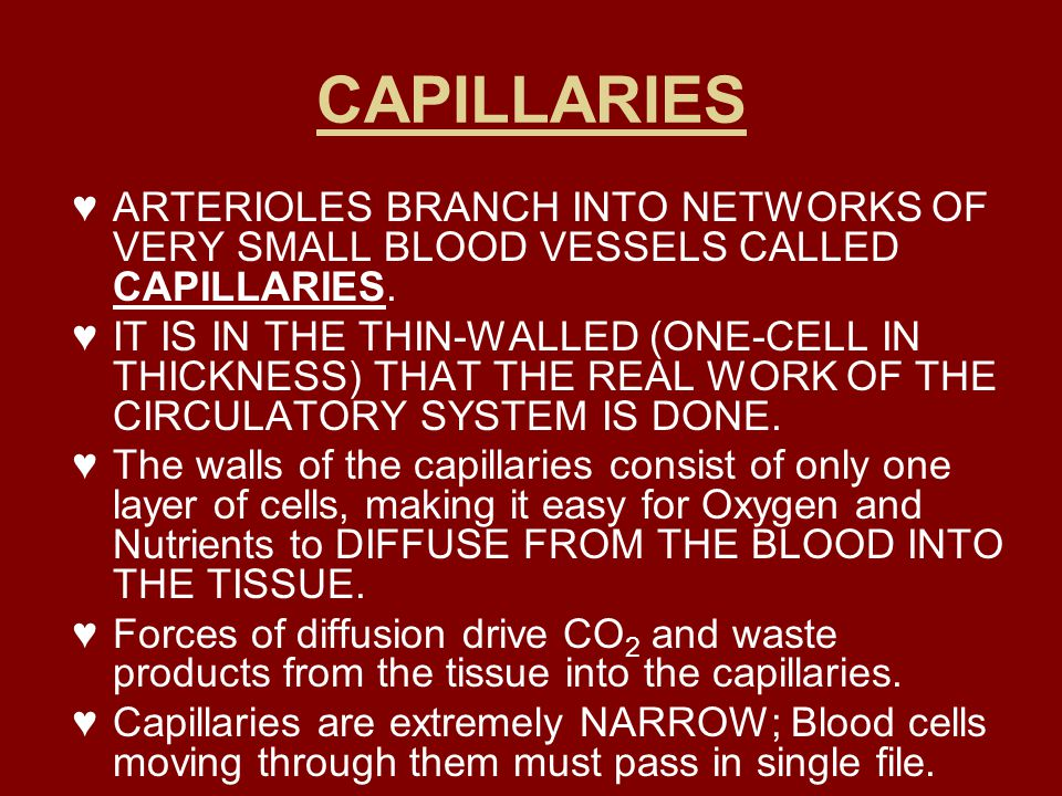 CAPILLARIES ARTERIOLES BRANCH INTO NETWORKS OF VERY SMALL BLOOD VESSELS CALLED CAPILLARIES.