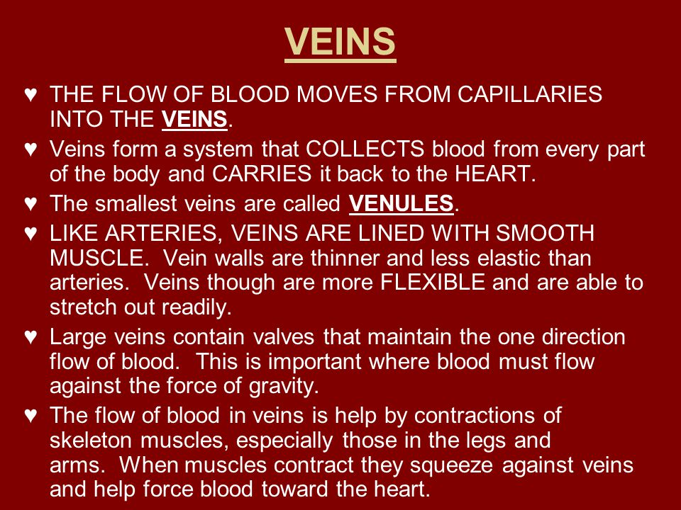 VEINS THE FLOW OF BLOOD MOVES FROM CAPILLARIES INTO THE VEINS.