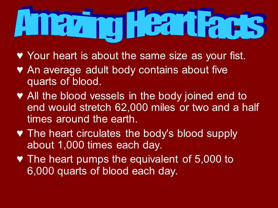 Amazing Heart Facts Your heart is about the same size as your fist.