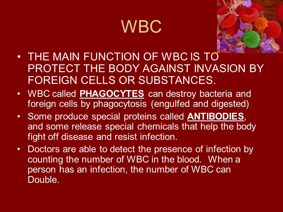 WBC THE MAIN FUNCTION OF WBC IS TO PROTECT THE BODY AGAINST INVASION BY FOREIGN CELLS OR SUBSTANCES.