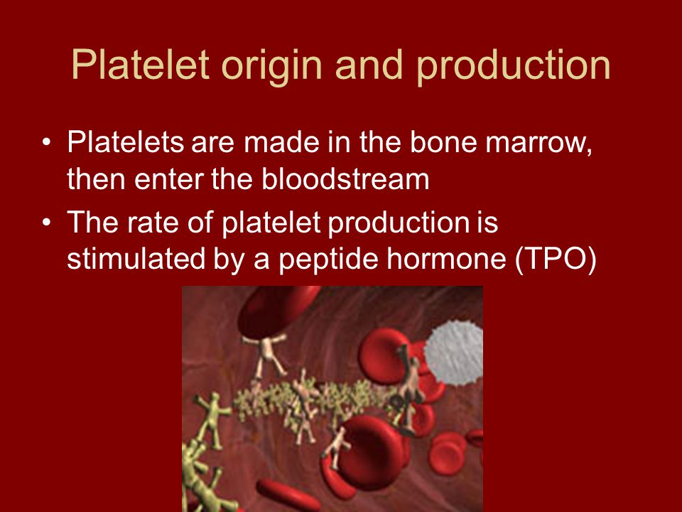 Platelet origin and production