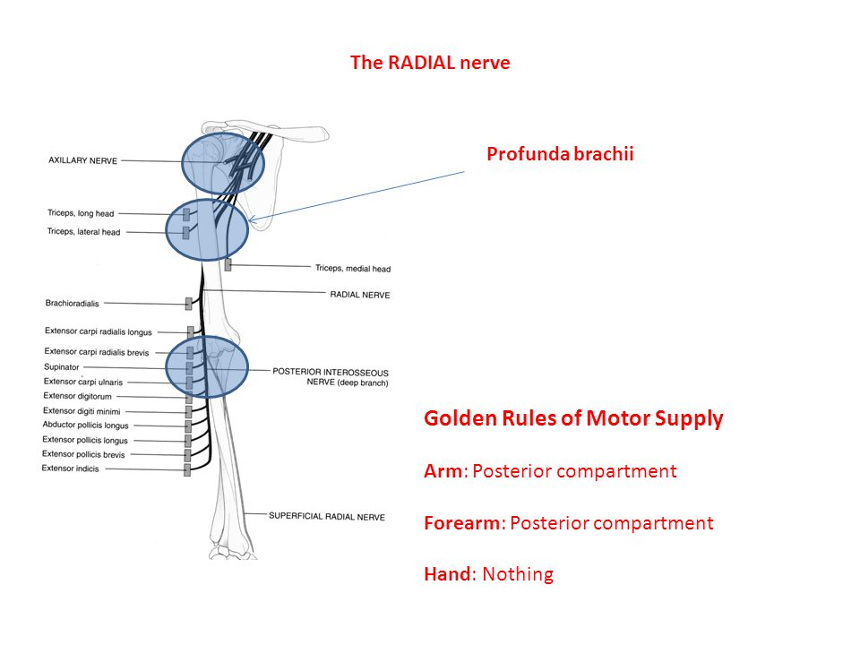 Golden Rules of Motor Supply