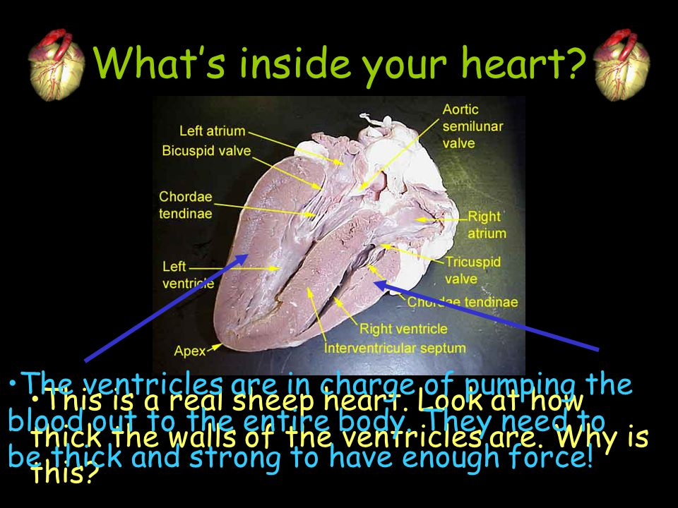 What's inside your heart