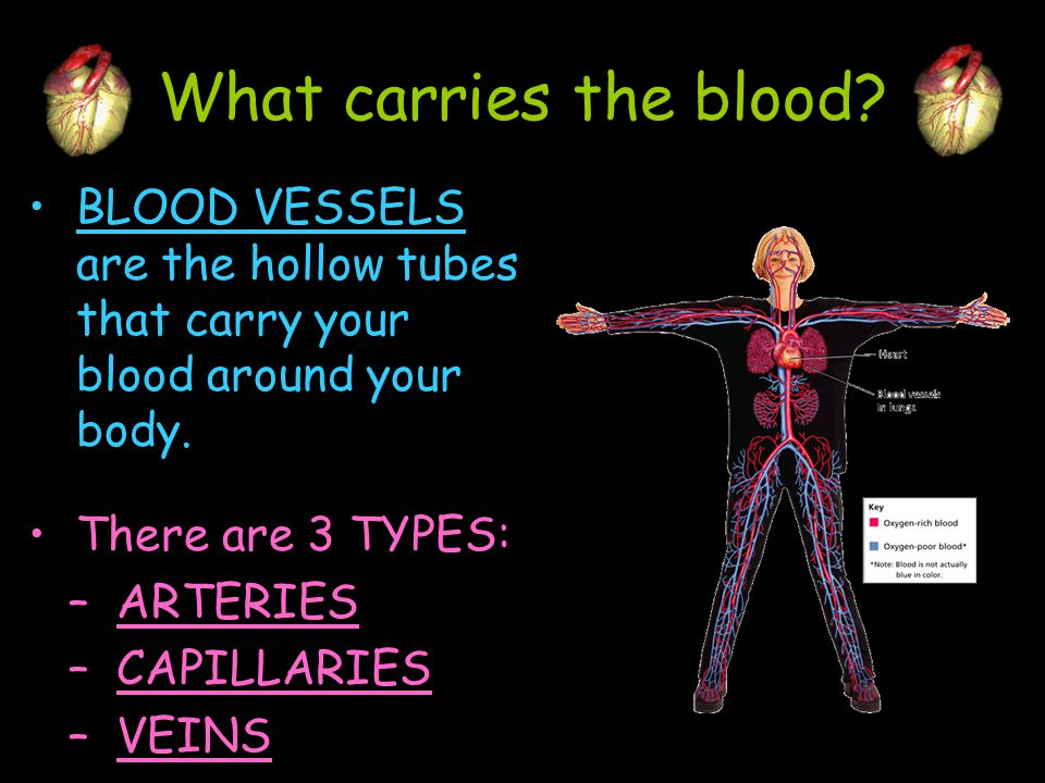 What carries the blood BLOOD VESSELS are the hollow tubes that carry your blood around your body. There are 3 TYPES:
