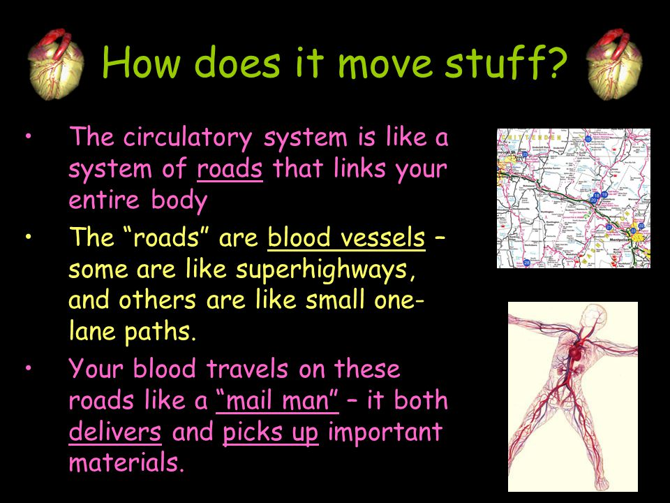 How does it move stuff The circulatory system is like a system of roads that links your entire body.