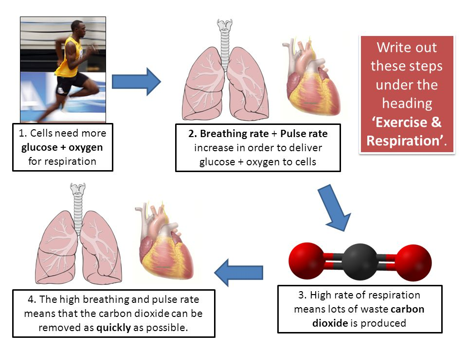 Write out these steps under the heading 'Exercise & Respiration'.