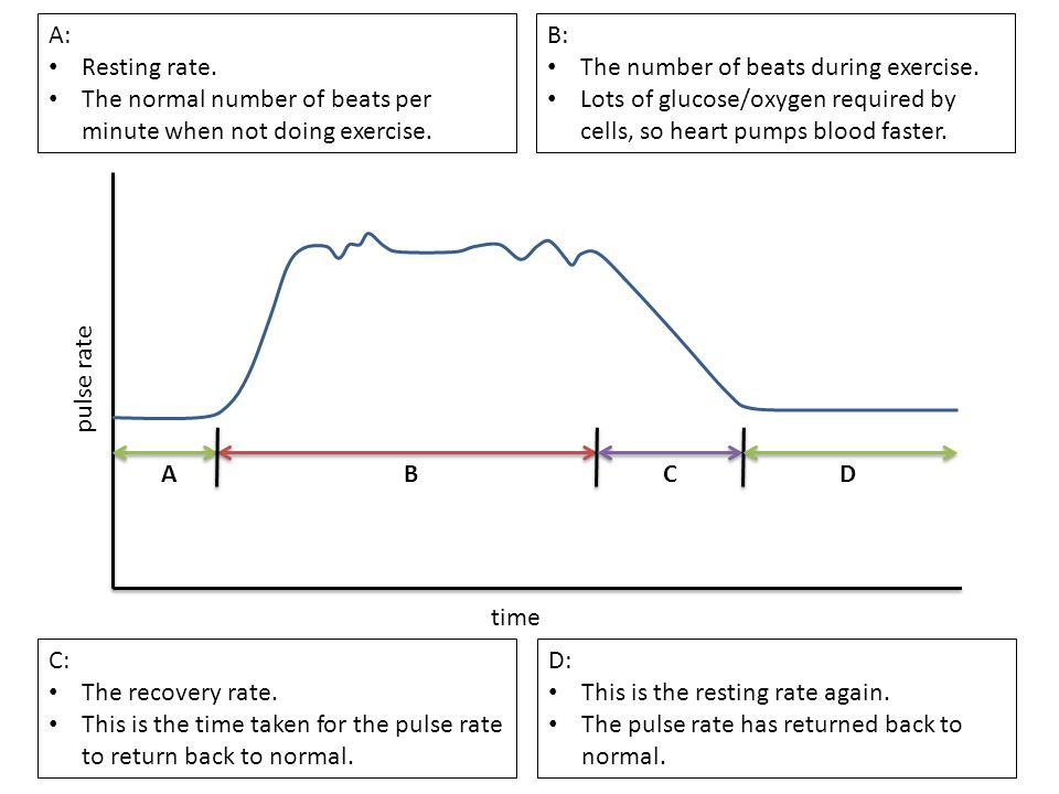 A: Resting rate. The normal number of beats per minute when not doing exercise. B: The number of beats during exercise.