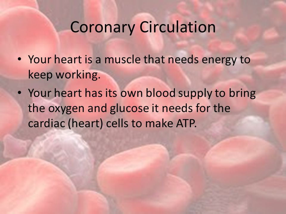 Coronary Circulation Your heart is a muscle that needs energy to keep working.
