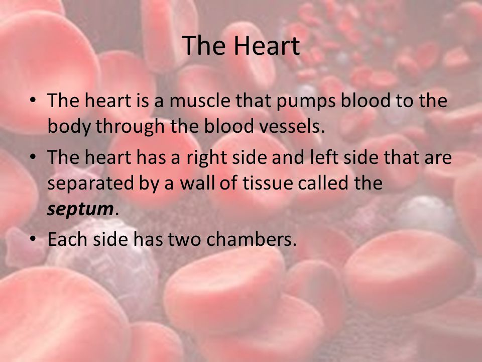The Heart The heart is a muscle that pumps blood to the body through the blood vessels.