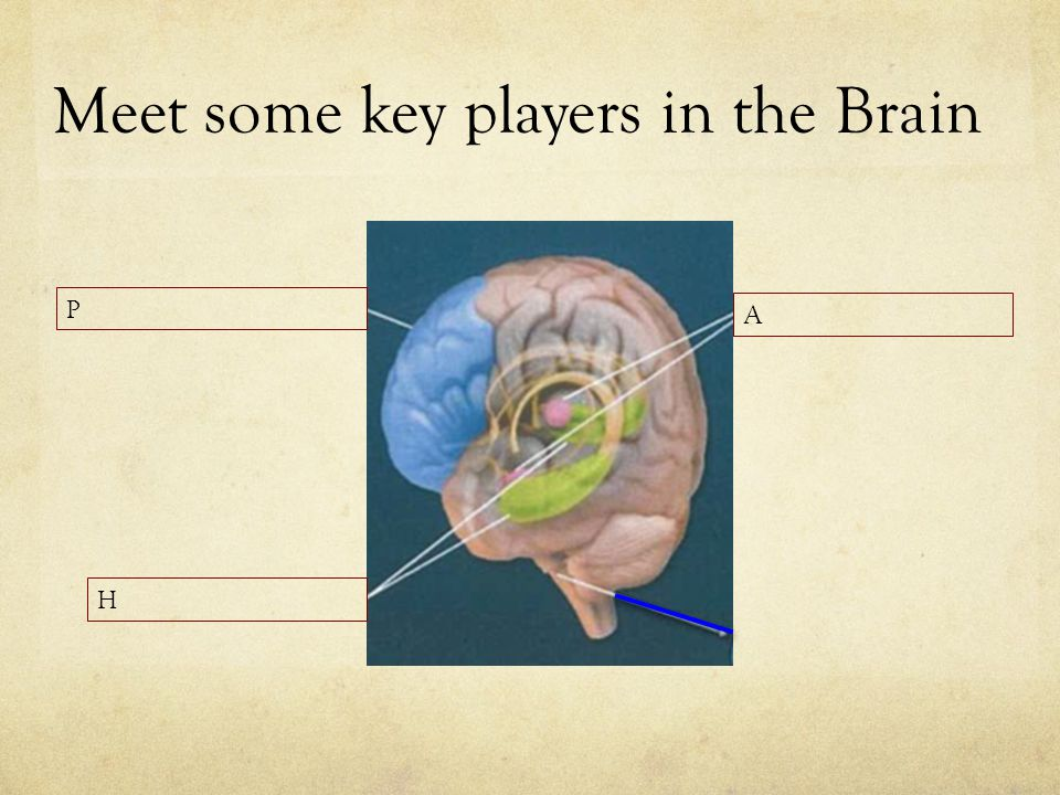 Meet some key players in the Brain
