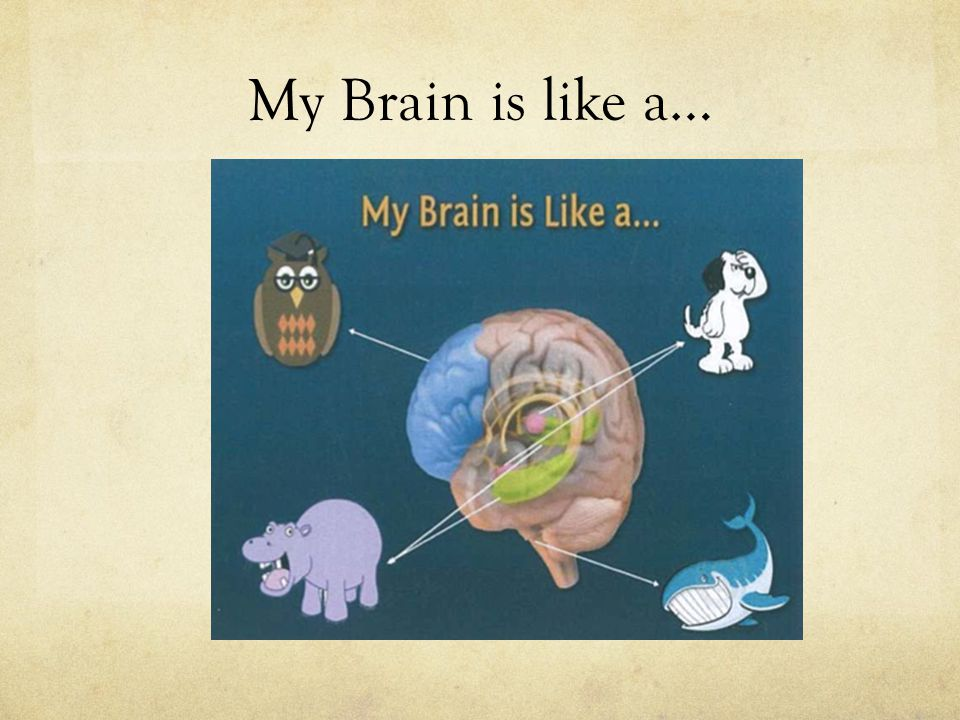 My Brain is like a…