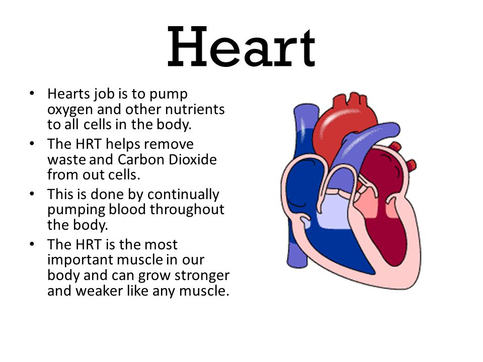 Heart Hearts job is to pump oxygen and other nutrients to all cells in the body. The HRT helps remove waste and Carbon Dioxide from out cells.
