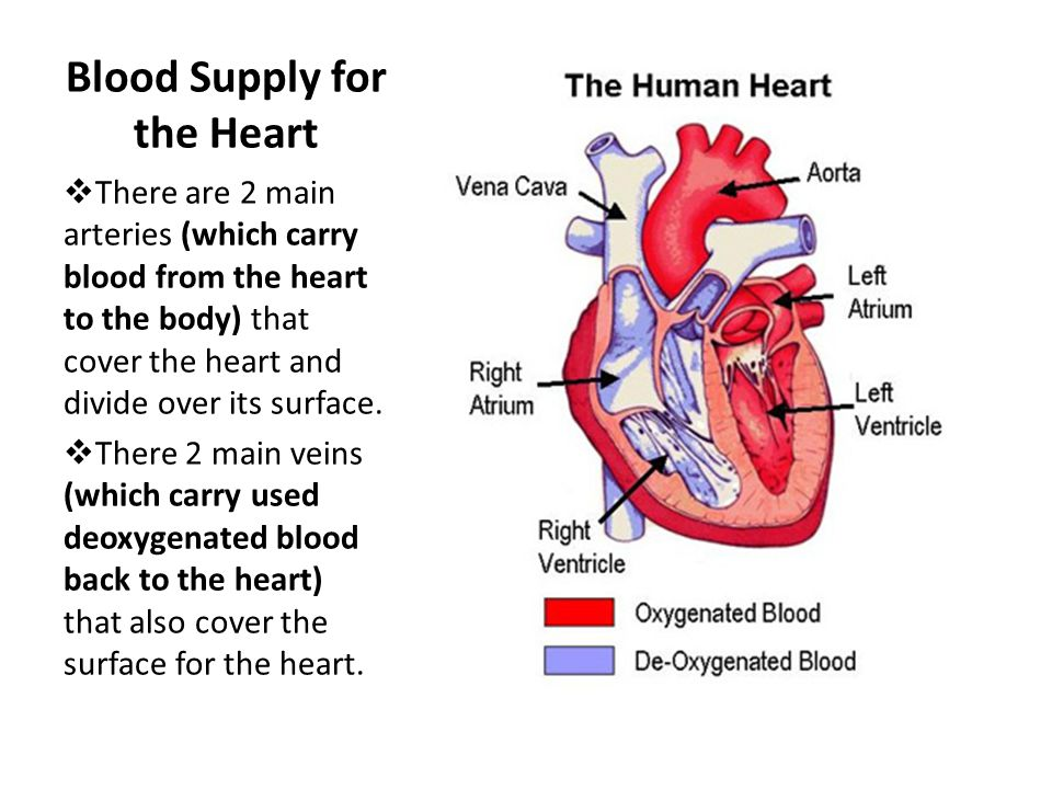 Blood Supply for the Heart