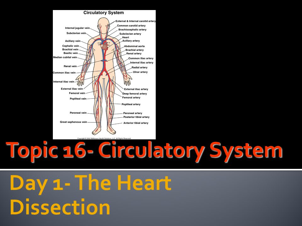 Topic 16- Circulatory System