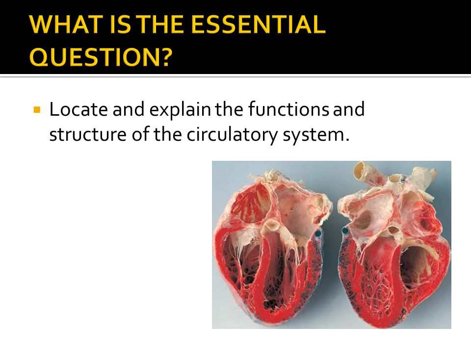 WHAT IS THE ESSENTIAL QUESTION