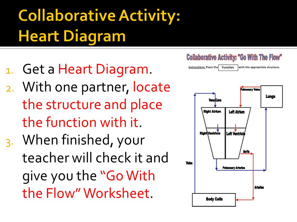 Collaborative Activity: Heart Diagram