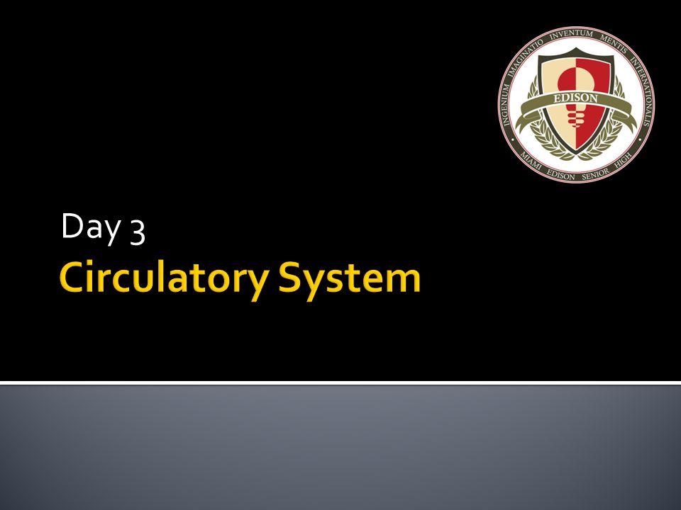 Day 3 Circulatory System