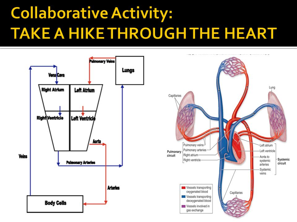 Collaborative Activity: TAKE A HIKE THROUGH THE HEART