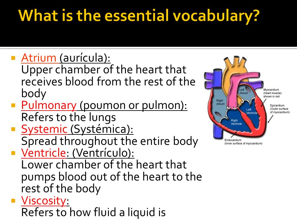 What is the essential vocabulary
