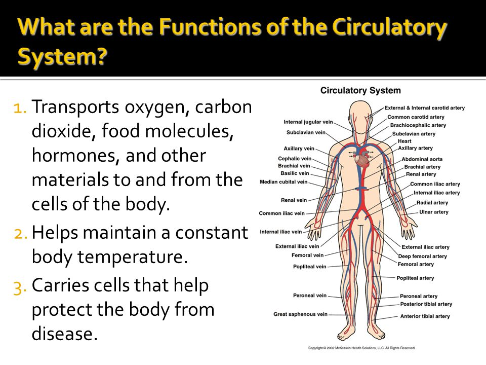 What are the Functions of the Circulatory System