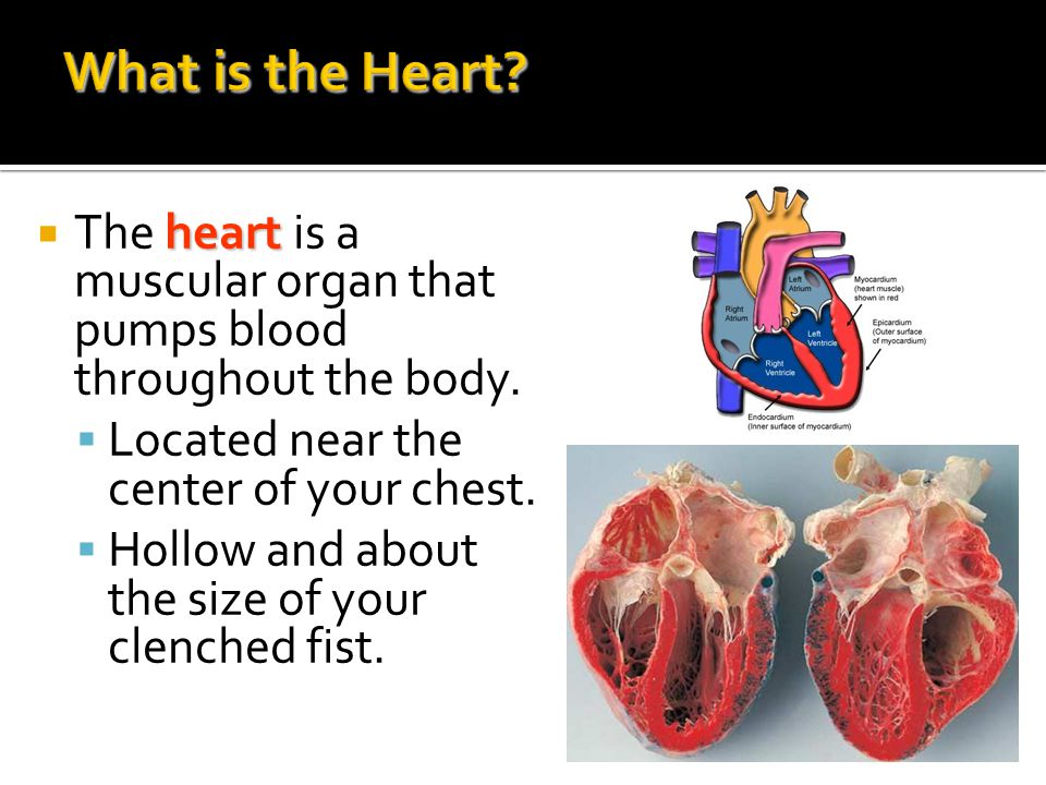 What is the Heart The heart is a muscular organ that pumps blood throughout the body. Located near the center of your chest.