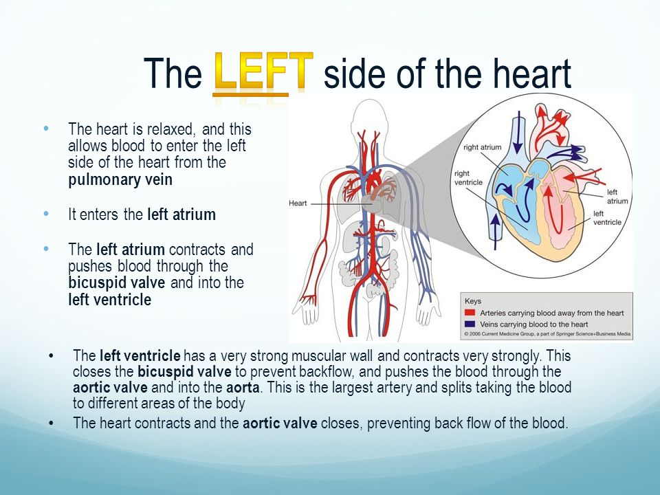 The Left side of the heart