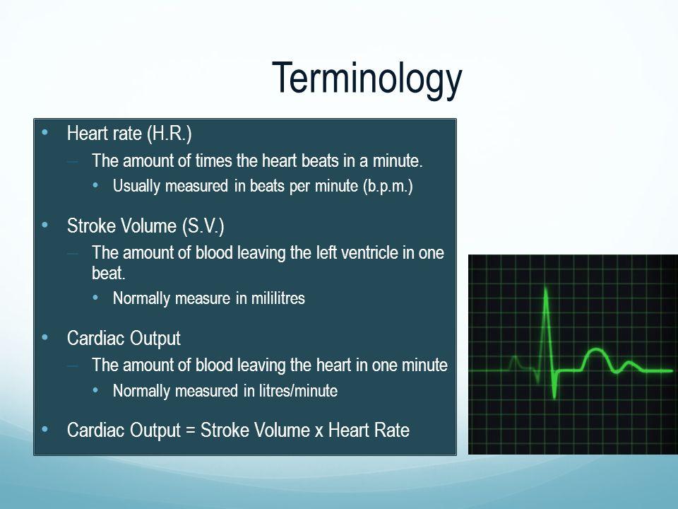 Terminology Heart rate (H.R.) Stroke Volume (S.V.) Cardiac Output