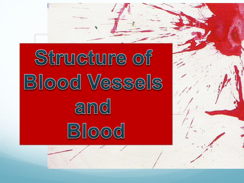 Structure of Blood Vessels and Blood