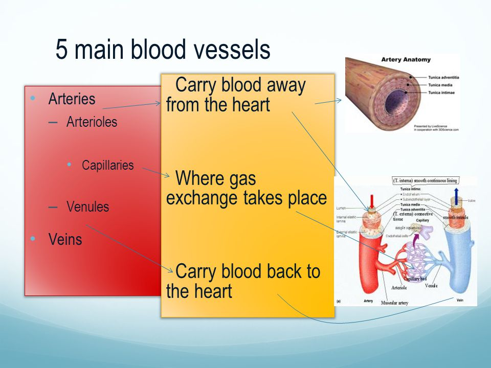5 main blood vessels Carry blood away from the heart