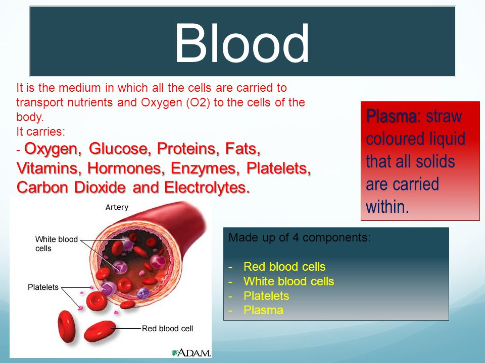 Blood It is the medium in which all the cells are carried to transport nutrients and Oxygen (O2) to the cells of the body.
