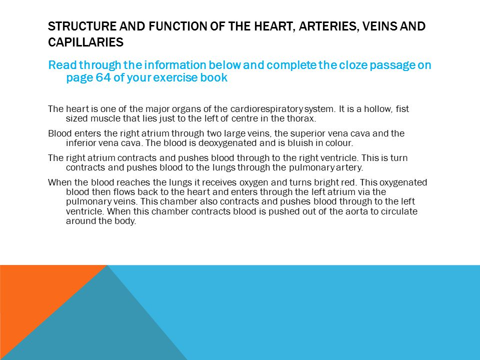 Structure and function of the heart, Arteries, veins and capillaries