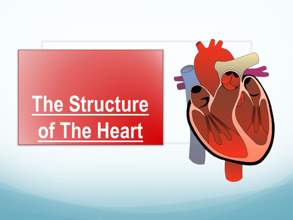 The Structure of The Heart - ppt video online download
