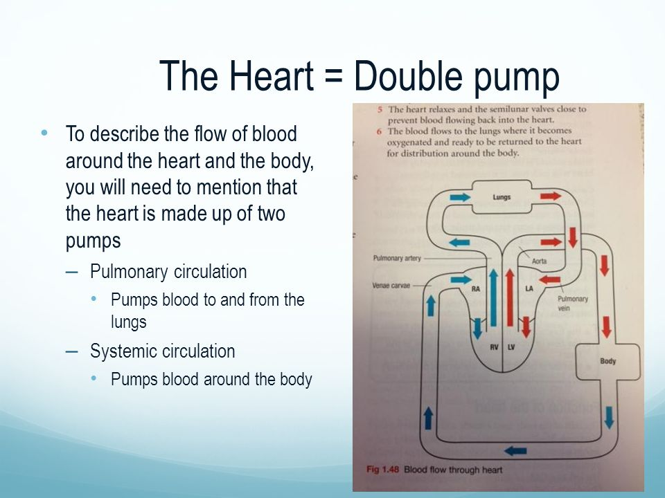 The Heart = Double pump