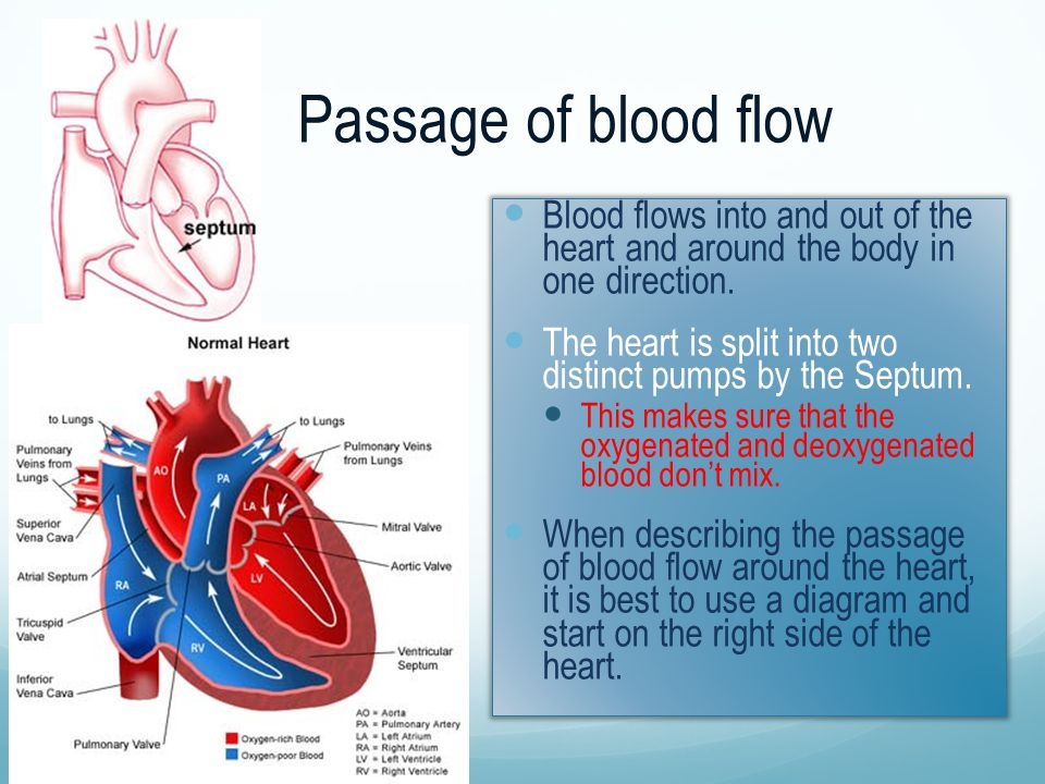 Passage of blood flow Blood flows into and out of the heart and around the body in one direction.