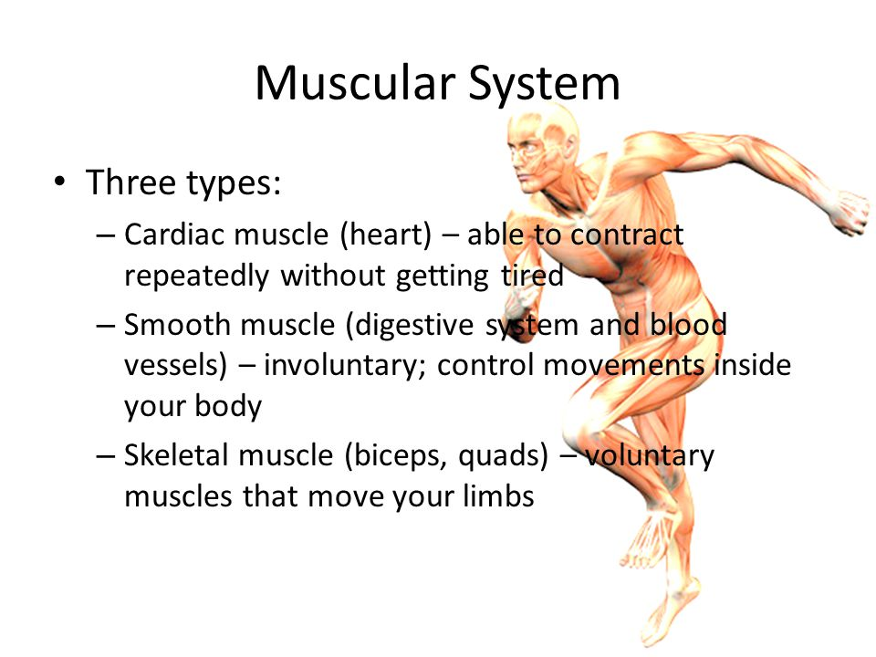 Muscular System Three types: