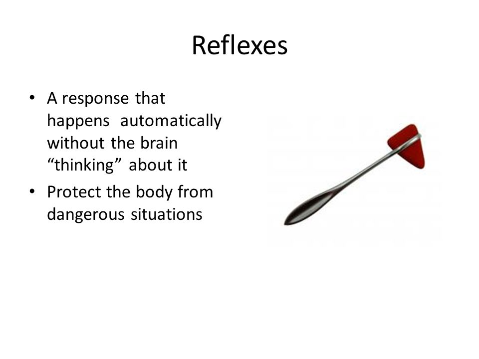 Reflexes A response that happens automatically without the brain thinking about it.