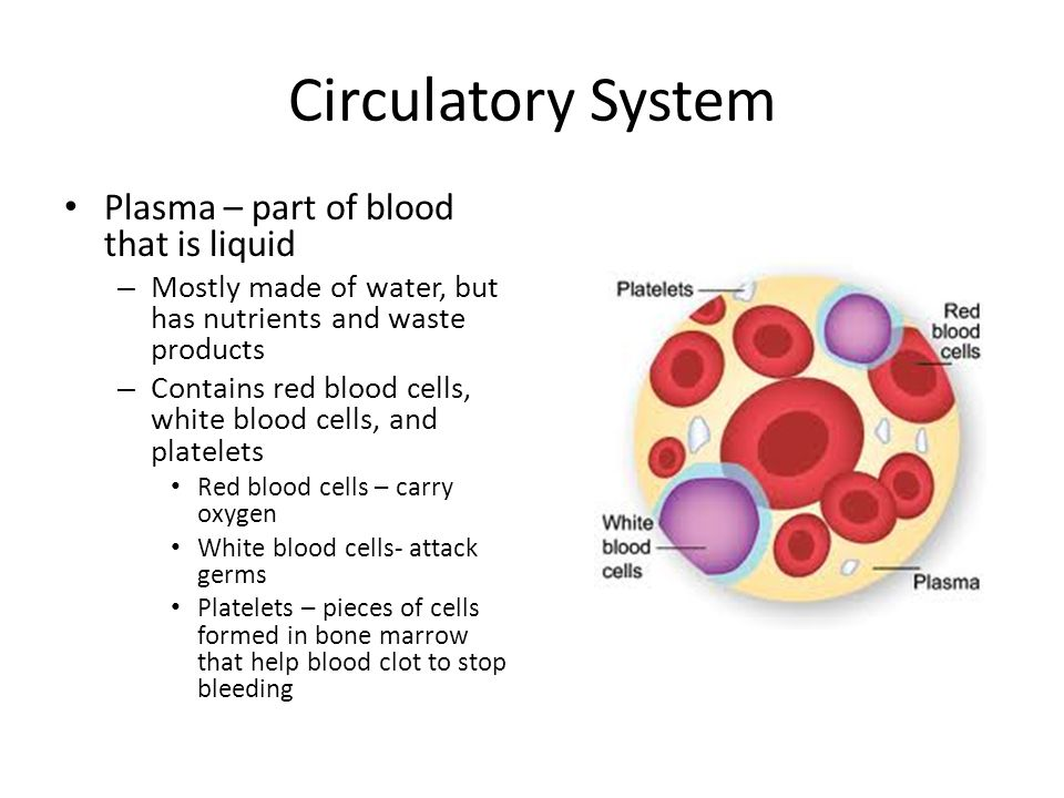 Circulatory System Plasma – part of blood that is liquid