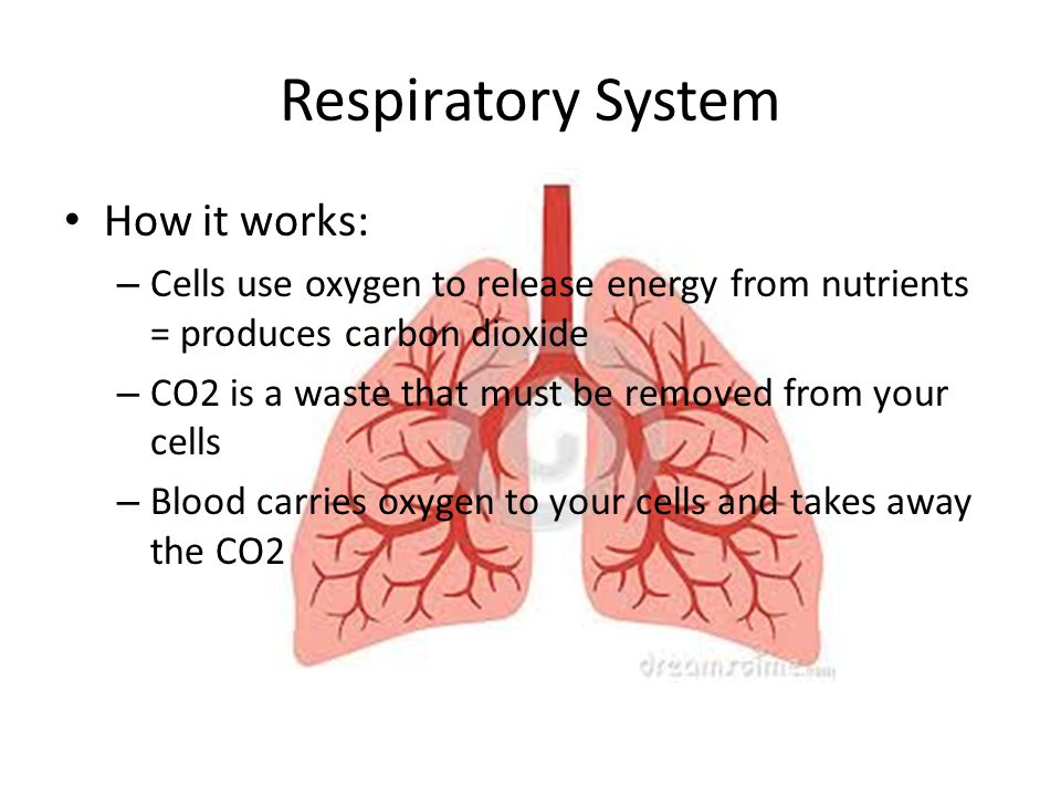 Respiratory System How it works: