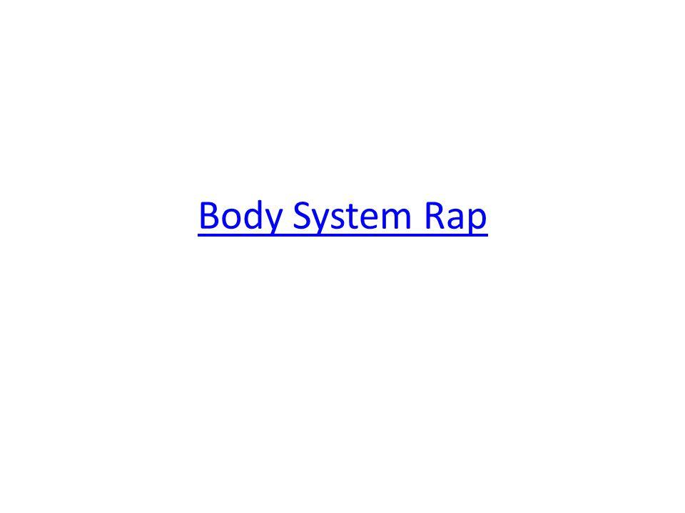 Body System Rap