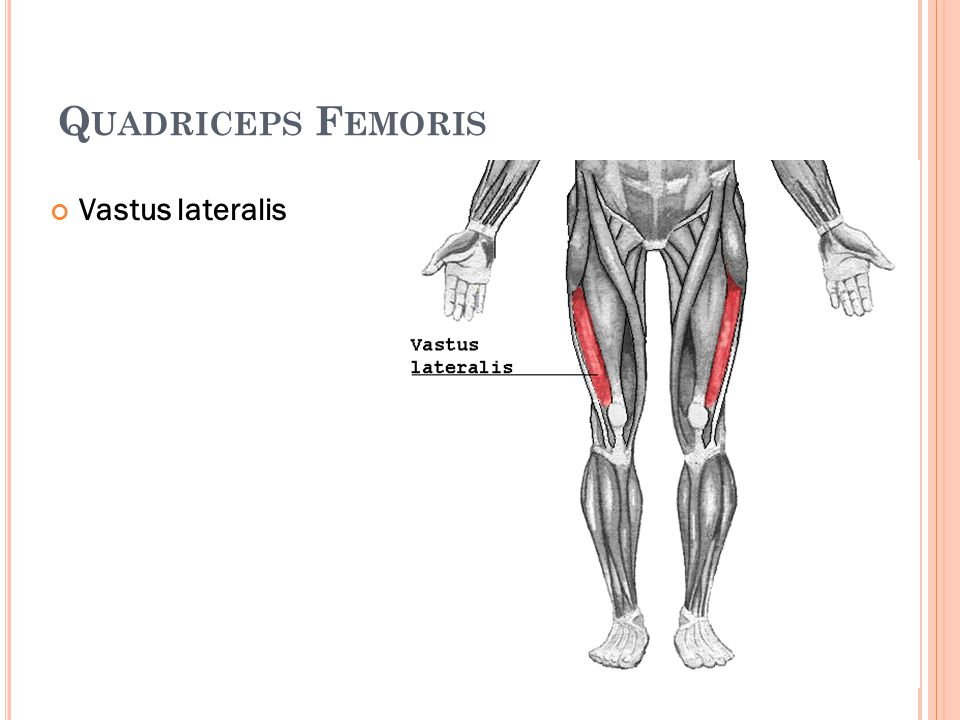 Quadriceps Femoris Vastus lateralis