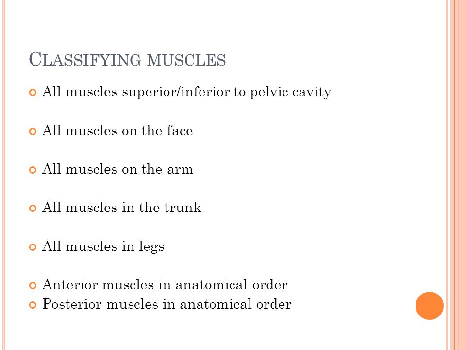 Classifying muscles All muscles superior/inferior to pelvic cavity