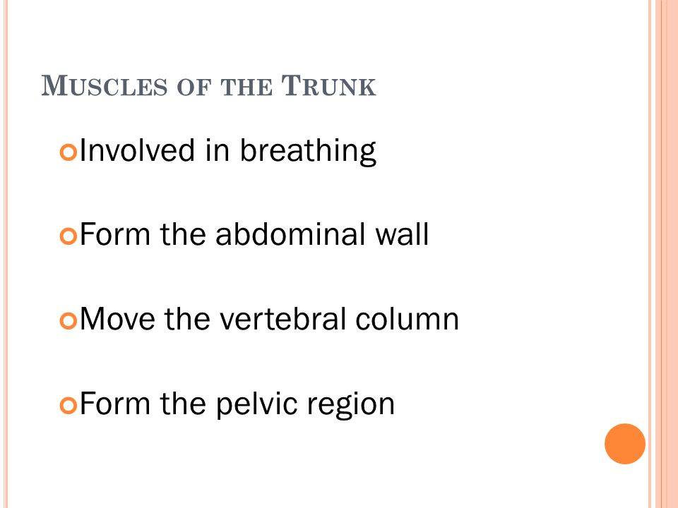 Form the abdominal wall Move the vertebral column