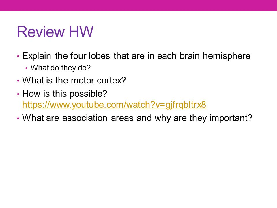 Review HW Explain the four lobes that are in each brain hemisphere
