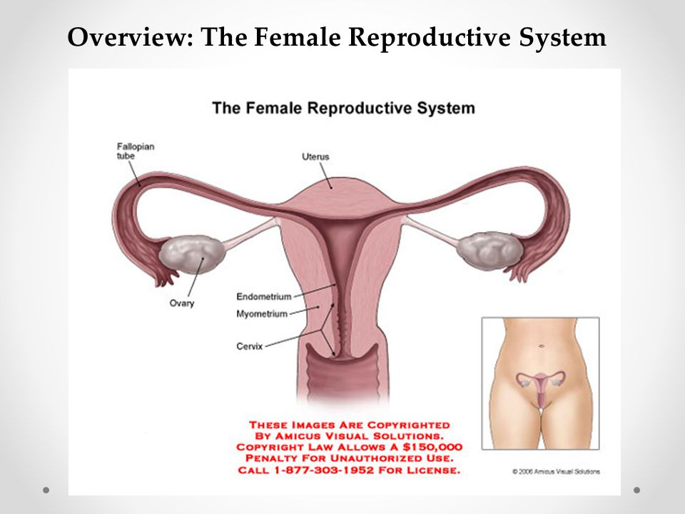 Overview: The Female Reproductive System
