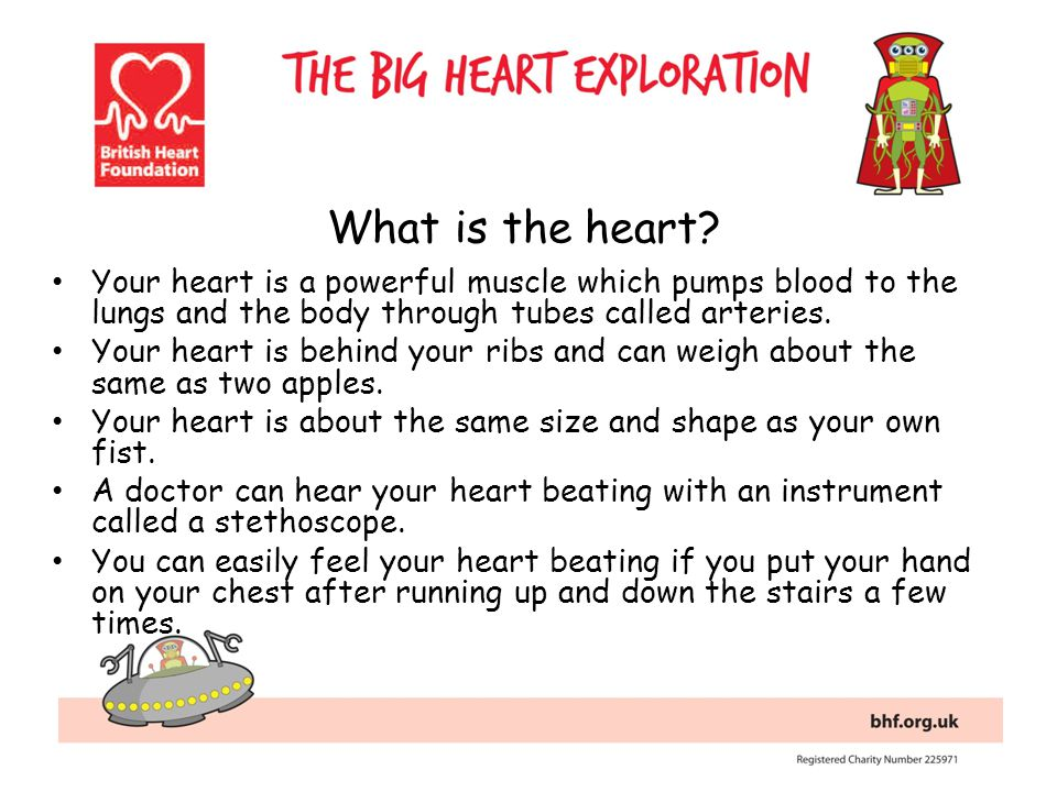 What is the heart Your heart is a powerful muscle which pumps blood to the lungs and the body through tubes called arteries.