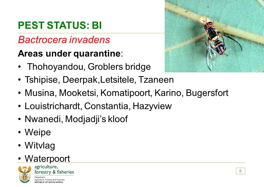 PEST STATUS: BI Bactrocera invadens Areas under quarantine: