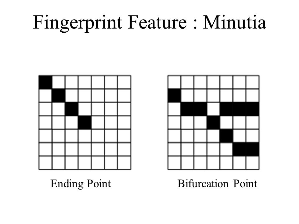 Fingerprint Feature : Minutia