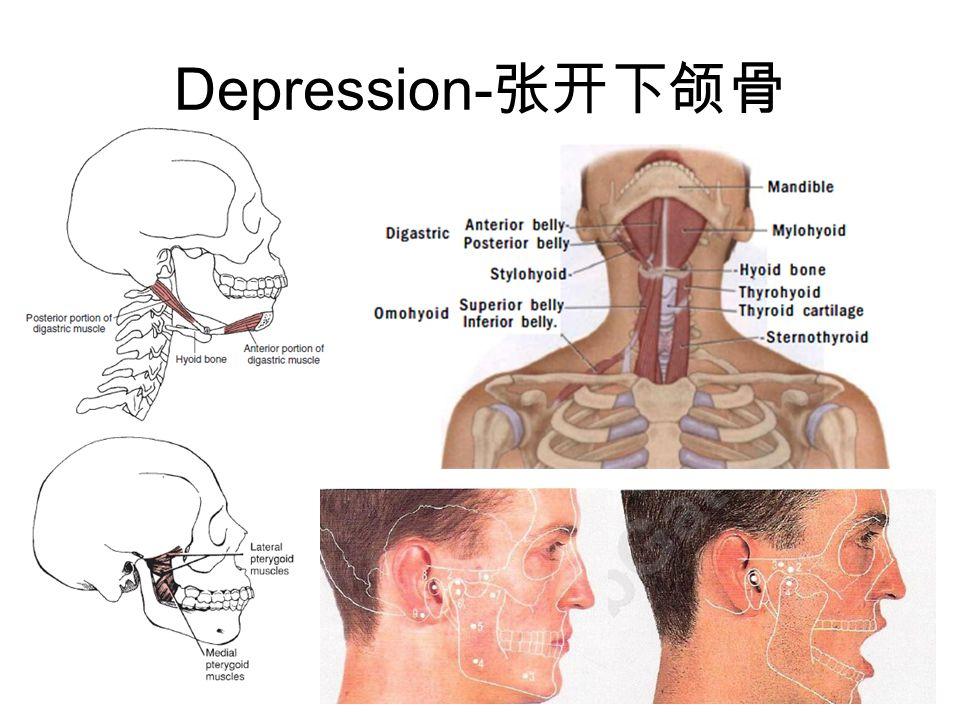Depression-张开下颌骨