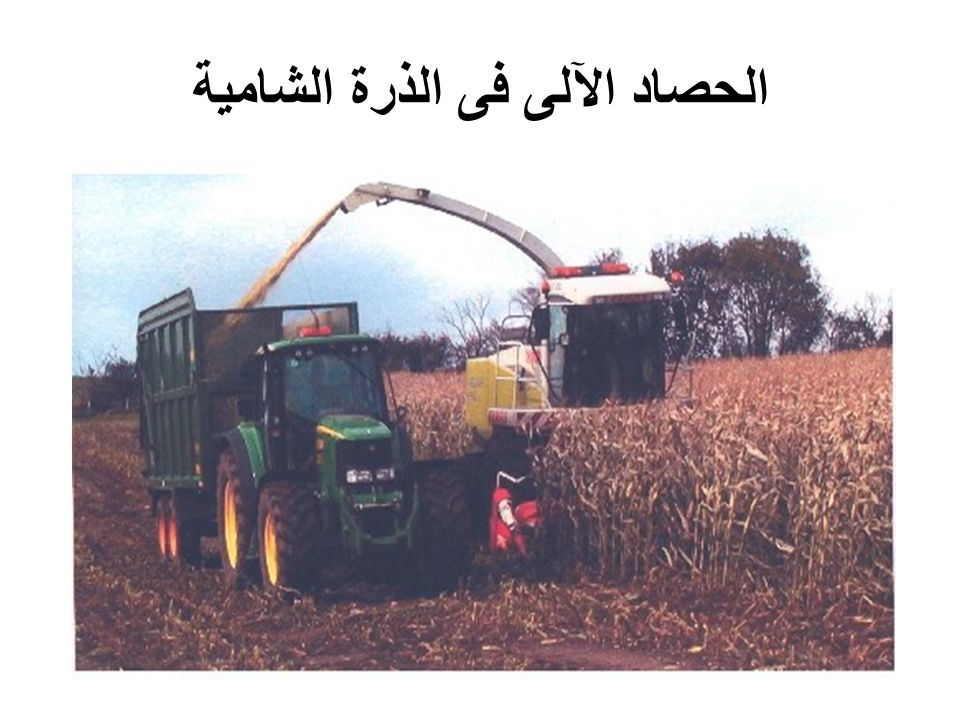الحصاد الآلى فى الذرة الشامية