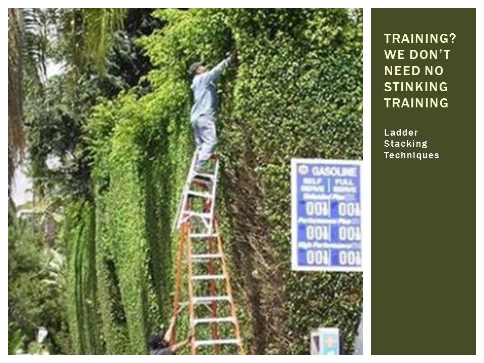 TRAINING We DON't NEED NO STINKING TRAINING
